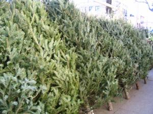 hopkinton boy scout troup 1 is selling fresh cut christmas trees again this year the tree lot behind colellas supermarket opens the day after thanksgiving - Boy Scout Christmas Trees